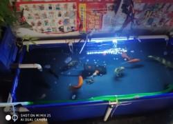 客户自己动手组装的帆布鱼池,养鱼用的